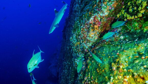 Fish, shark and coral reef.